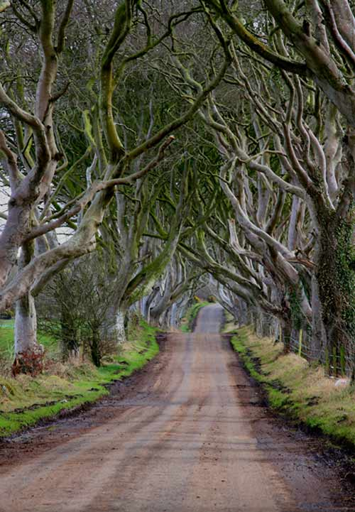 Dark-Hedges-58k.jpg